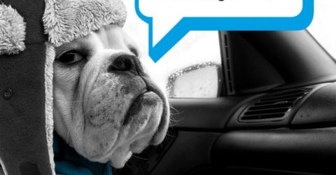 YOUR FREE WINTER DRIVING GUIDE. YOU'D BE BARKING NOT TO.